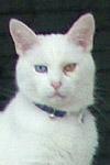 Curious cat, Lancaster. ©NRT