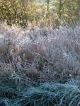 Frost, Lancaster, UK. ©NRT