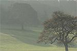 Lancaster University campus grounds, UK, seen from Bailrigg Lane. ©NRT